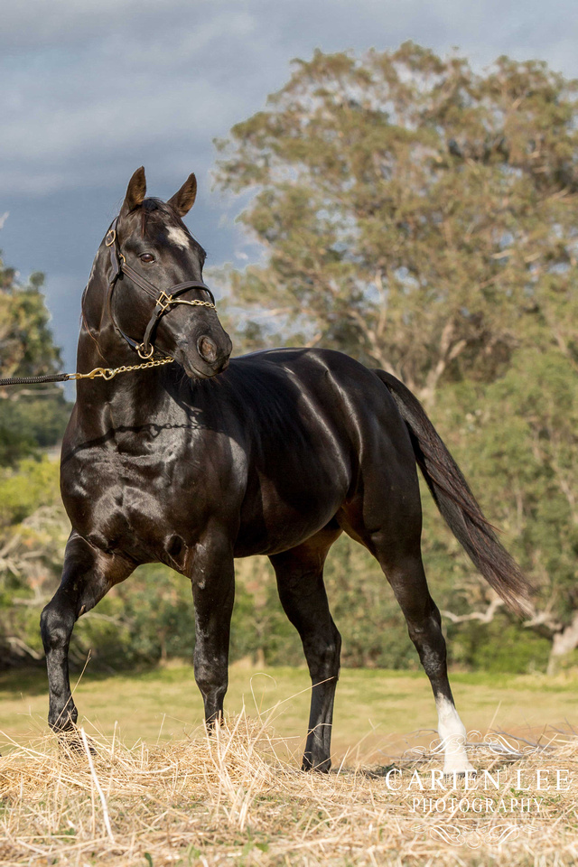 Bunbury-equine-photography-advance-attack-11