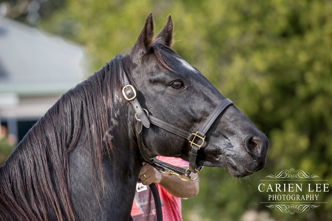 Bunbury-equine-photography-advance-attack-26